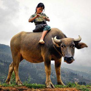 惊呆了:泰国人竟然用水牛治疗自闭症儿童!