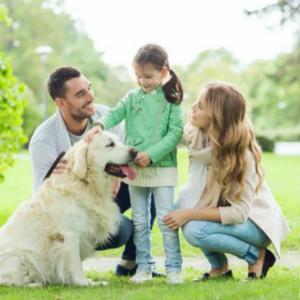 狗狗是如何治疗自闭症儿童的,你造吗?