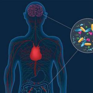 自闭症可能与肠道菌群相关,牛磺酸或可改善症状