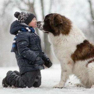 自闭症治疗犬真能促进孩子学习吗