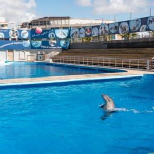 海豚治疗自闭症的骗局:多个英国家庭被骗(一)